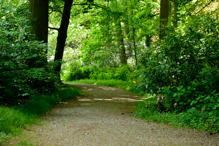 Park gravel road or path runing through green forest trees and plants