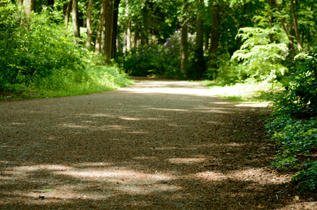 Park gravel road with fresh green colored forest trees and plants on the sides Zdjęcie Seryjne