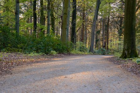 Gravel road in a park with fresh green colored forest trees and plants on the sides