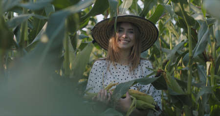 Happy young woman in a straw hat with bundles of corn in her hands stands between the stems of plants with an agricultural field and smiles