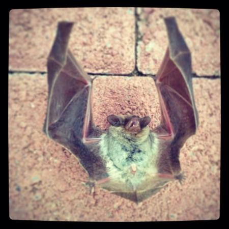 otganimalpets01: A bat on ground Stock Photo