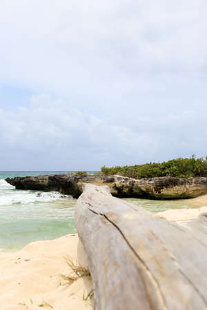 a dead tree trunk at the beach in Mexico