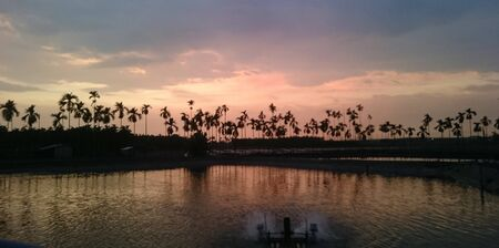 Sunset over a fish farm, palm trees in the background Stock fotó