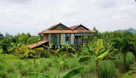 Traditional wooden Khmer house on a cambodian farm, banana trees in front of the house