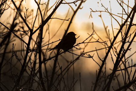 birds on branch: Birds on a branch at sunset