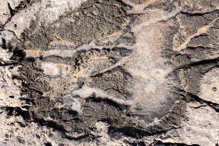 sediments: The natural formation of sea salt