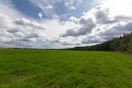 Green meadow under the forest. Cloudy sky Stock Photo