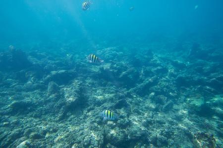 Underwater life of the Caribbean Sea. Stock Photo