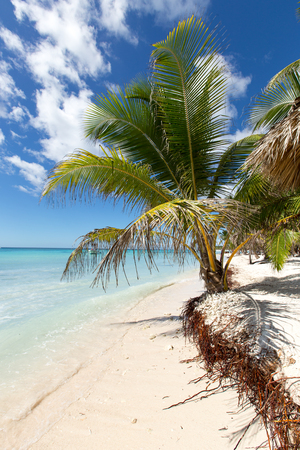 Scenic Beach With Palm Tree and white sand.