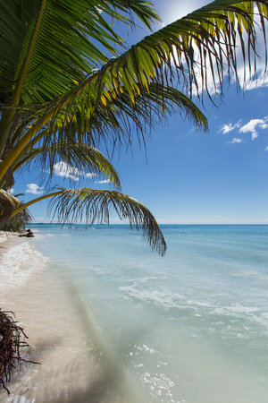 Palm leaves on white sand on a background turquoise seascape.