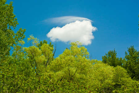 colorful cloudscape: Blue sky background with white clouds and a tree