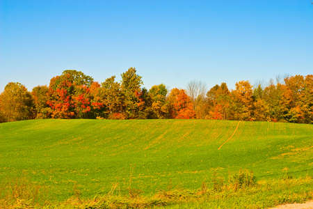 Beautiful cloudless fall day with vibrant colors photo