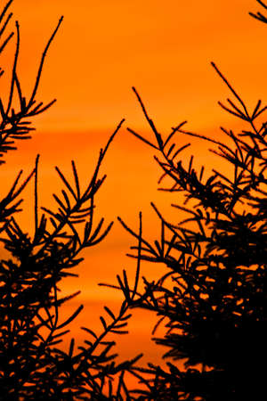 conserving: trees in silhouette on hillside at dusk, square frame Stock Photo