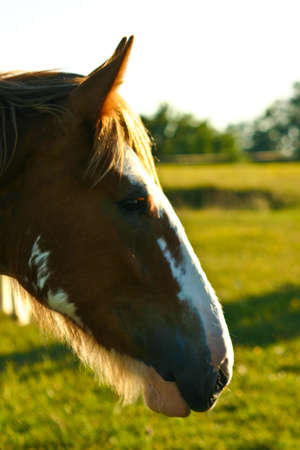 Horses in a meadow grazing and playing Stock Photo