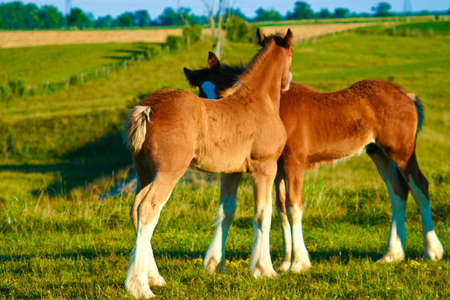 Horses in a meadow grazing and playing Stock Photo - 3841188