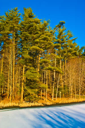winter landscape. forest and snow at the edge of the forest Stock Photo - 4104197