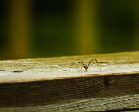 Spider waiting to attack Banco de Imagens