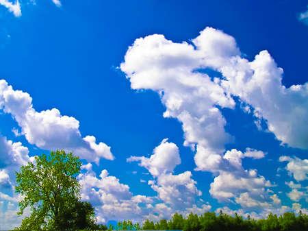 White Clouds in A Bright Blue Sky
