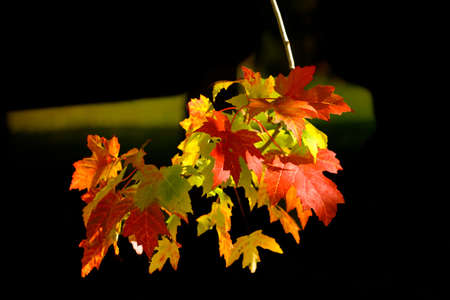 Autumn Leaves of different colors Stock Photo - 7110394