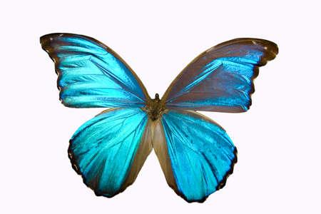 Aislados en la mariposa blanca de colorido con sus alas se extendió  Foto de archivo