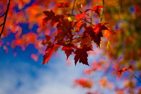 Autumn Leaves van verschillende kleuren