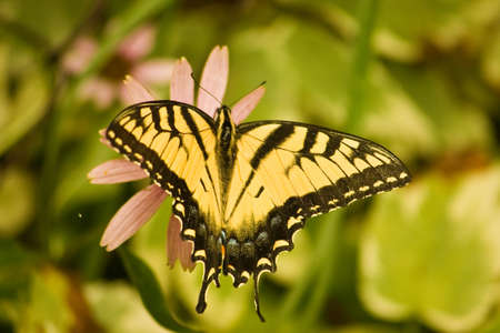 Yellow butterfly sitting on a flower in the garden