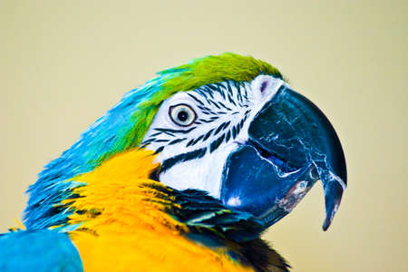 Colorful Parrot against a blurred background
