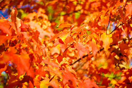 Colorful Autumn Leaves bright change of color for the season