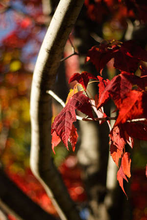 Colorful Autumn Leaves bright change of color for the season photo