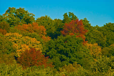 autumn leaves on the the river(panorama)
