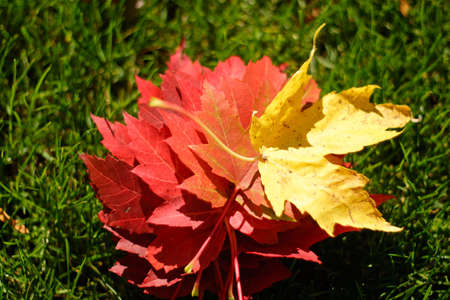 Autumn Leaves of different colors