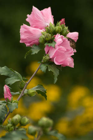 Pink Flowers that are growing in the garden Stock Photo