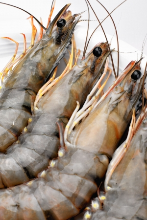 Raw tiger prawns on a white plate Reklamní fotografie