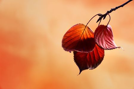 Autumn colored leaves hanging from a branch