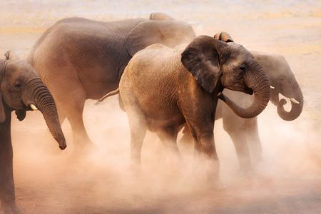 Disturbed elephants creating a lot of dust in Etosha desert Stok Fotoğraf