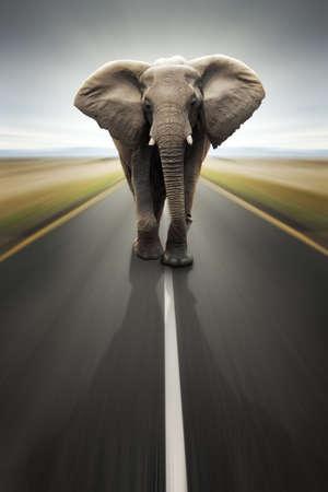 elefante: Conceptual - transporte pesado  viajes por carretera (digital composite)