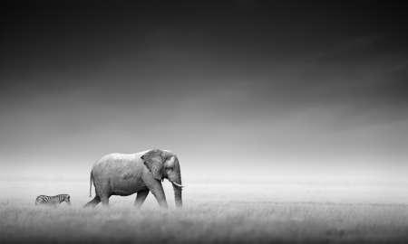 elefante: Elefante con la cebra detr�s en las llanuras abiertas del procesamiento de Etosha Art�stico Foto de archivo