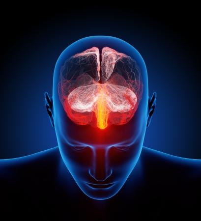 Menselijke hersenen geïllustreerd met miljoenen kleine zenuwen - Conceptuele 3d render Stockfoto