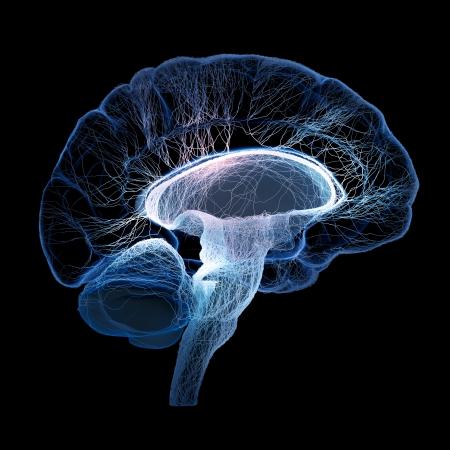 El cerebro humano se ilustra con pequeños nervios interconectados - 3d Foto de archivo - 24291188