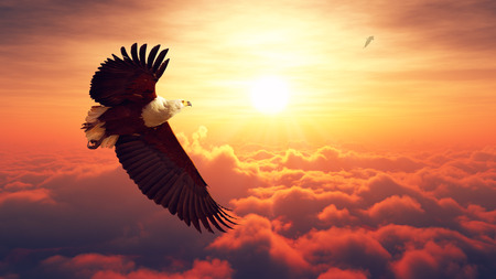 Afrikaanse zeearend vliegt hoog boven de wolken met sunrise Digitaal kunstwerk Stockfoto
