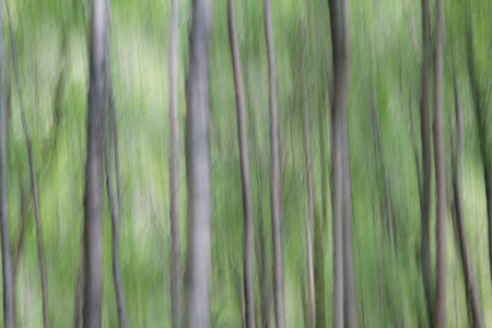 loch lomond: Birchtrees near Loch Lomond, Scotland.