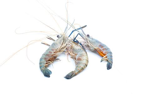 rosenbergii: Fresh water Crayfish on isolated background Stock Photo