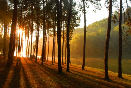 Sun rise at Pang-ung, Pine forest in Thailand. Stock Photo