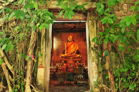 Root of the tree absorbing the ruins of the Temple in thailand  photo