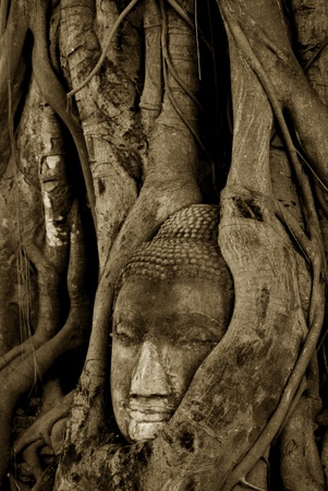 Buddha head is covered with roots, Wat Mahathat in Ayutthaya, Thailand photo