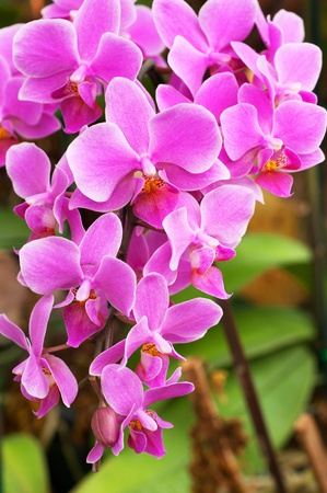 Pink orchids on green background Stock Photo - 12890160