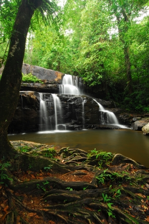 Waterfall in rain forest Stock Photo - 15206122