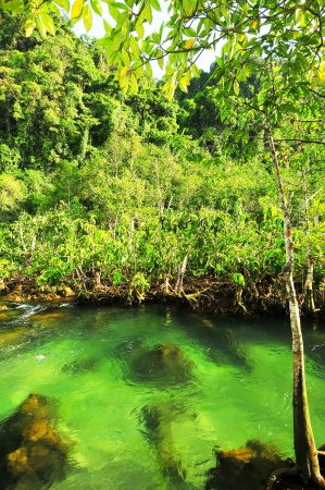 klong: Tha Pom nature trail and Crystal stream, Krabi, Thailand  Stock Photo