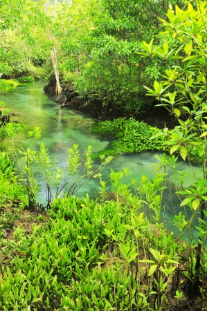 thapom: Tha Pom nature trail and Crystal stream, Krabi, Thailand  Stock Photo
