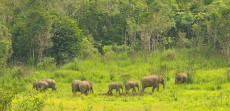 Family of wild asian elephants in Thailand  photo
